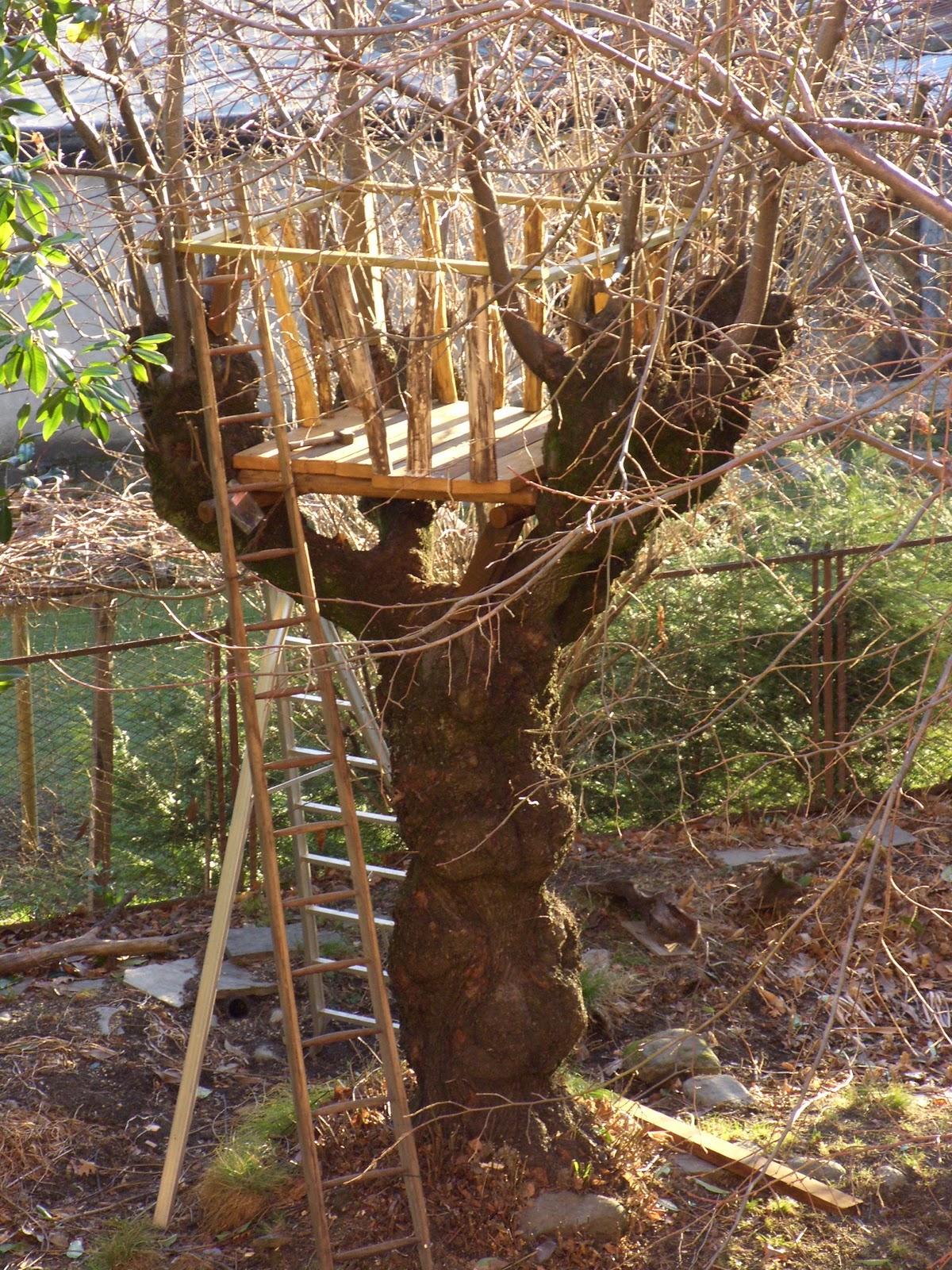 Cotto al vapore foto varie delle feste - Costruire casa sull albero ...