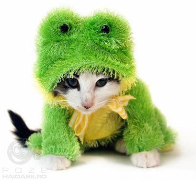 the animals harry potter cat frog cat hybrid cleopatra catCat Costume For Cats