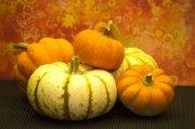 Cheap shot fall pumpkins photo