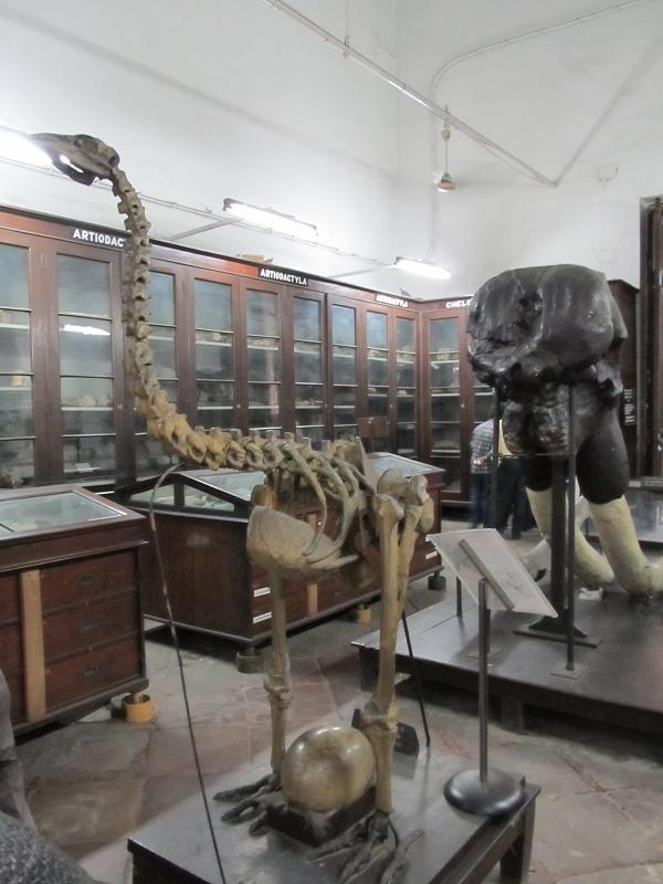 Kolkata India  City pictures : Indian Columbus: Indian Museum Kolkata, India