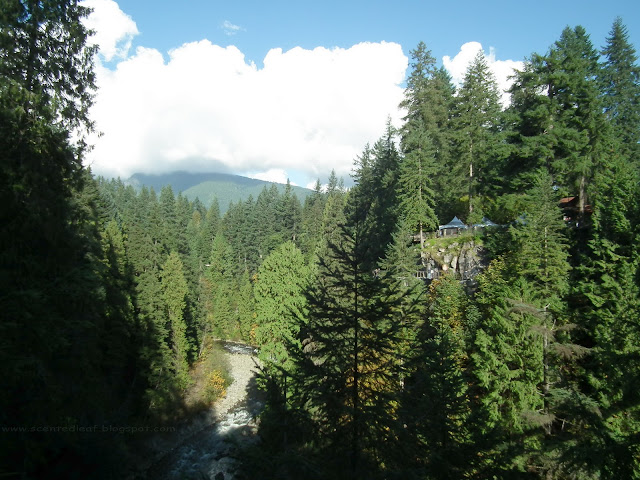 View from Capilano Suspension Bridge : Capilano River Canyon