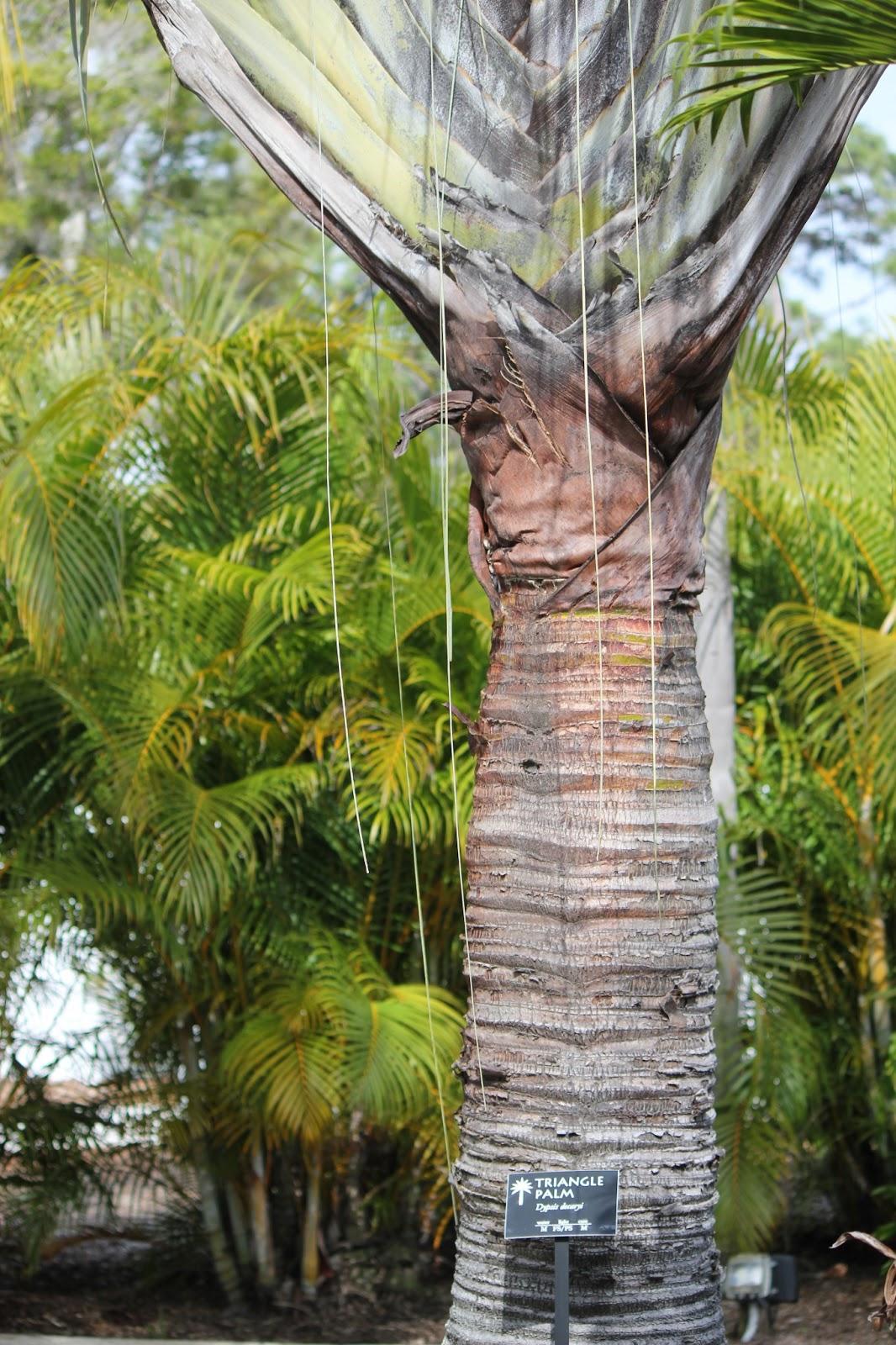 Pinellas County Parks Florida Botanical Gardens