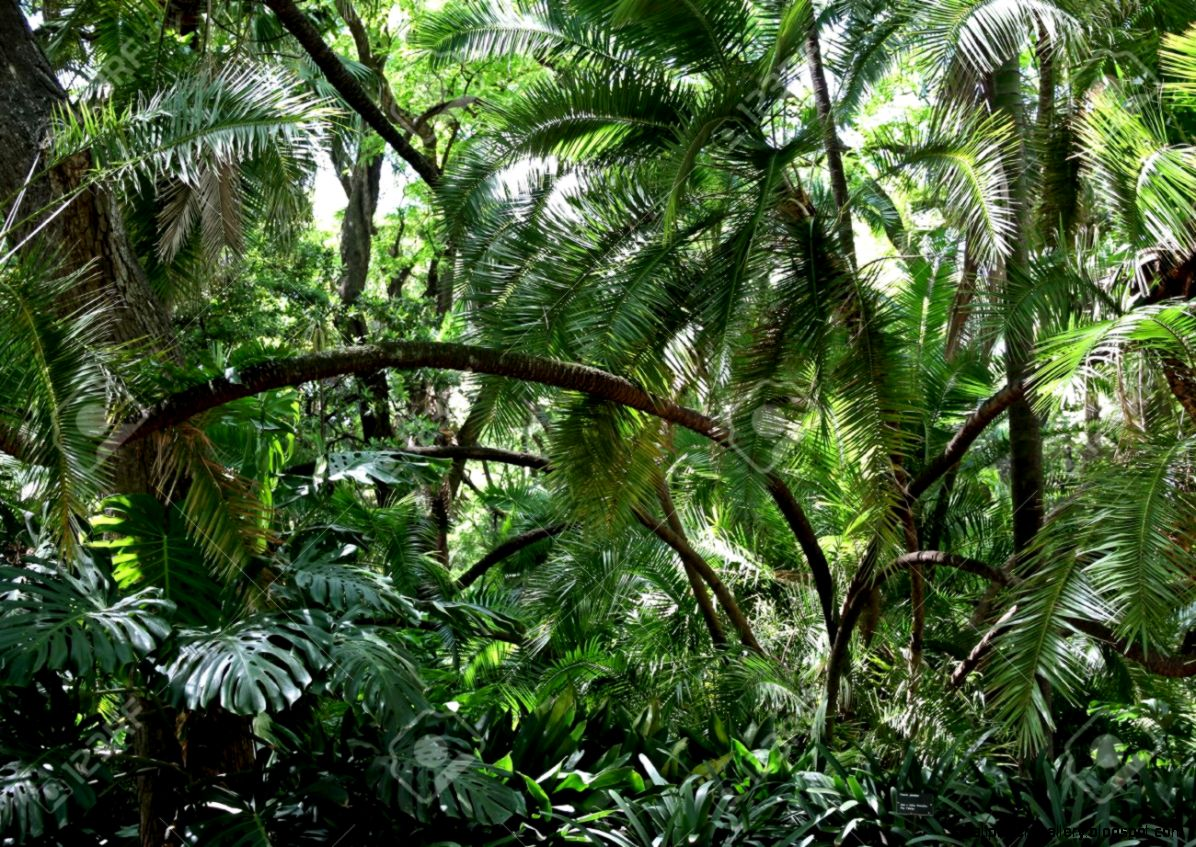 Rainforest Thickets Nature Of South America Stock Photo Picture