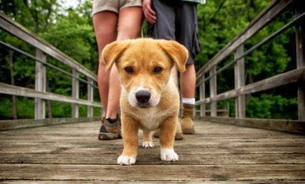 11 Reasons You Should Date a Dog Owner - dog walking