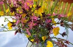 Nadwieprzańskie kwiaty
