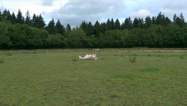 pony rolling