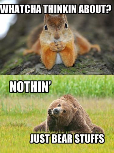Whatcha Thinkin About - Nothin - Just Bear Stuffs