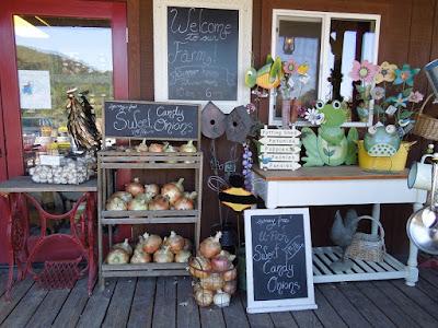 Giant Sweet Candy Onions at Jack Creek Farms, © B. Radisavljevic