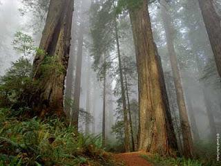Pembangkit Listrik Tenaga Pohon