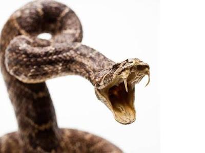 Significado dos Sonhos com Cobra Picando
