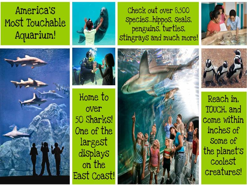 15 Tickets To Adventure Aquarium This Weekend Only 7 16
