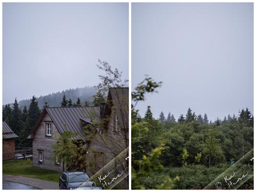 Harz (Torfhaus) im Nebel