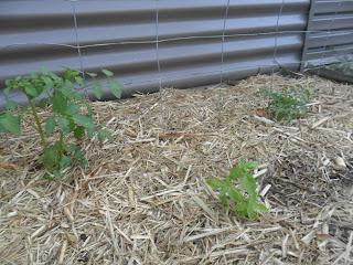 Vegie garden for kids