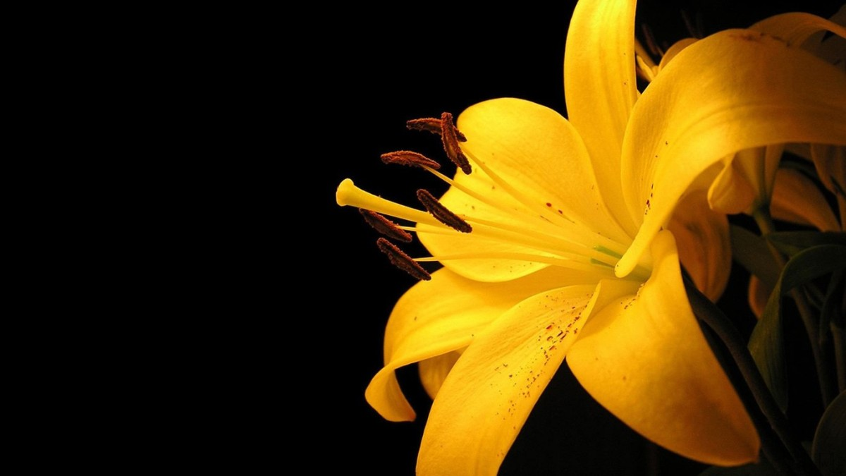 dark yellow wallpaper - photo #14
