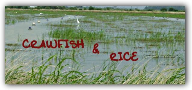 Crawfish & Rice: Salads and Sandwiches