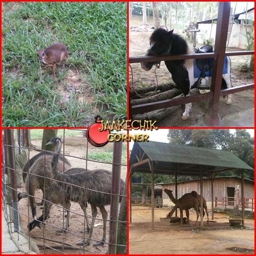 aktiviti menarik di Melaka, melaka, tempat menarik di Malaysia, tempat menarik di melaka, tempat-tempat menarik di malaysia, animal safari, harga animal safari, harga tiket wonderland, animal safari a famosa