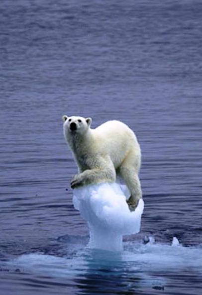 Ambientalismo
