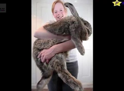 Of The Worlds Biggest Pets Nature Knows - 10 of the worlds biggest pets