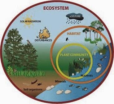Ekosistem: Apa Pengertian Ekosistem