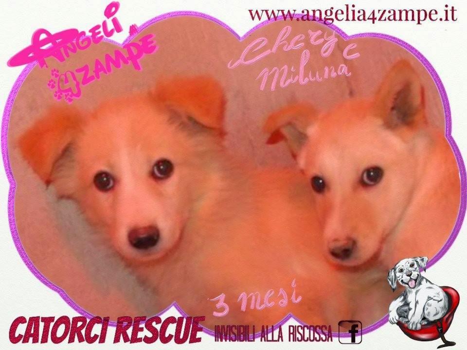 Chery e Miluna,3 mesi futura tg medio piccola