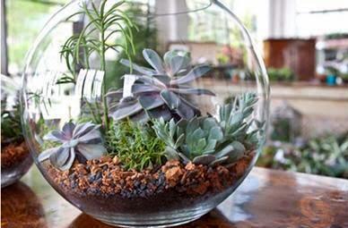 Office Indoor Succulents