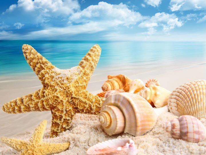 Fotografias Y Fotos Para Imprimir Fotografias De Conchas De Mar - Fotos-de-conchas-de-mar