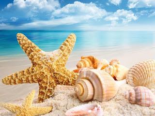 conchas de mar en la orilla