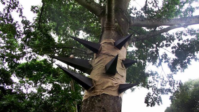 La Ceiba y el silencio sagrado