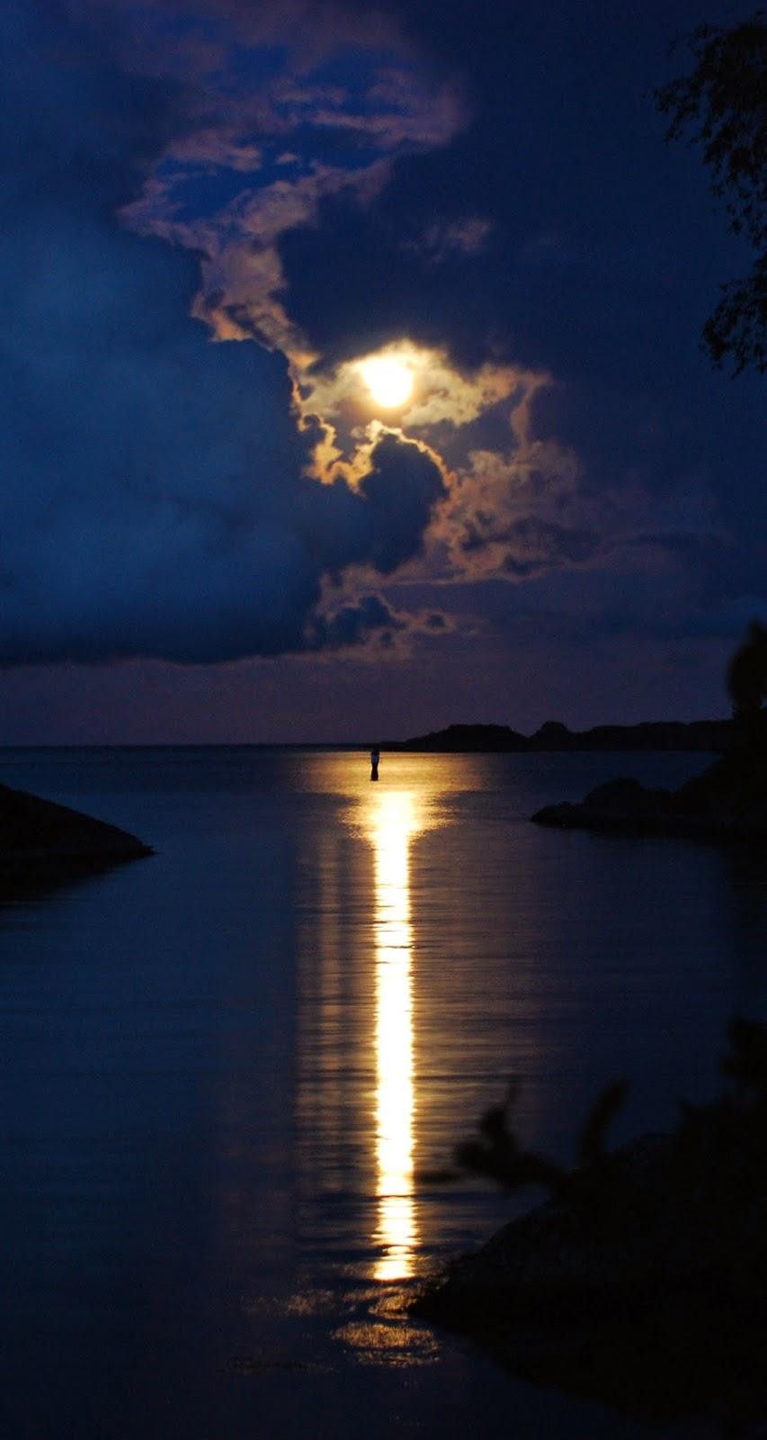 skogsky moonlight image