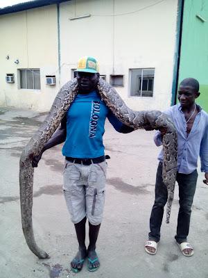 10 Men Kill Giant Python In Lagos