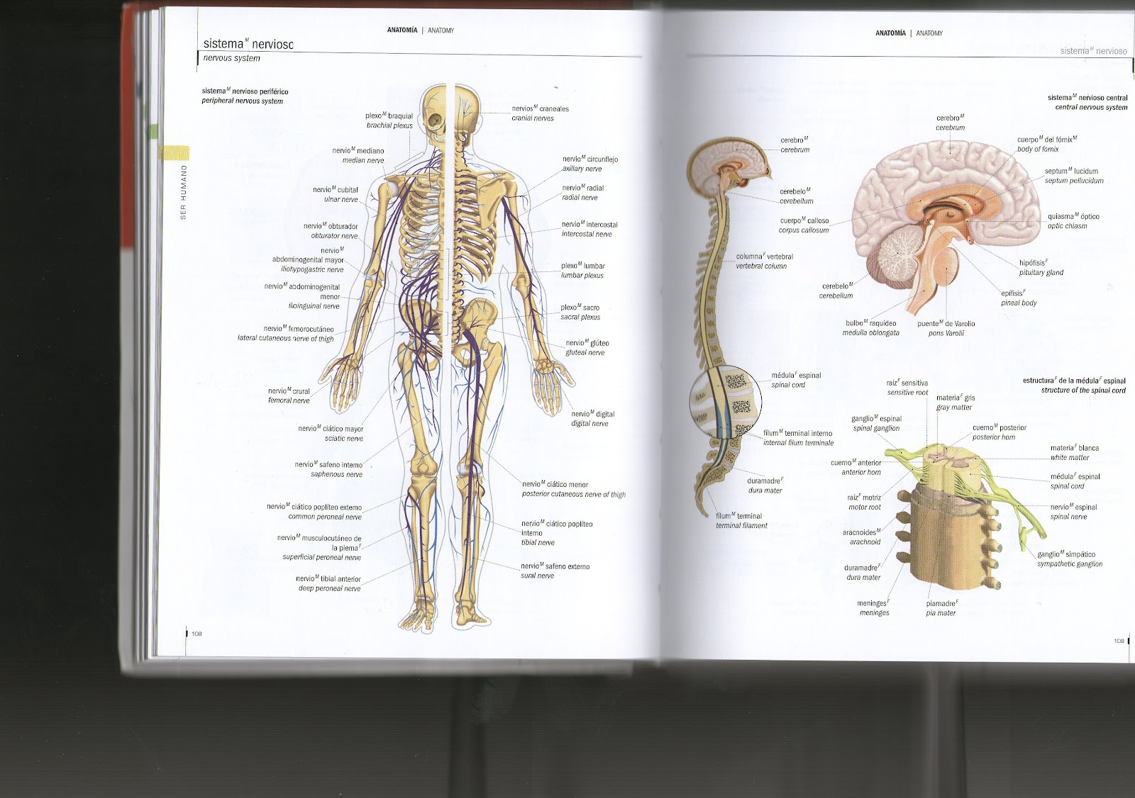 Bbc Science Nature Human Body And Mind Body Puberty