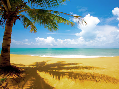 Coconut tree with beach wallpapers