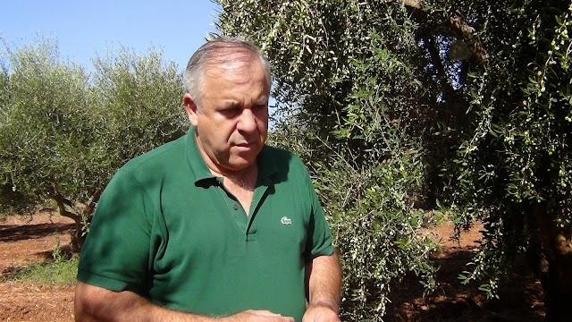 Ξεκίνησαν οι φυτεύσεις στα θερμοκήπια της Τριφυλίας
