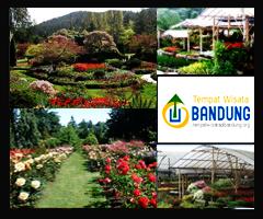 <b>taman bunga cihideung</b>