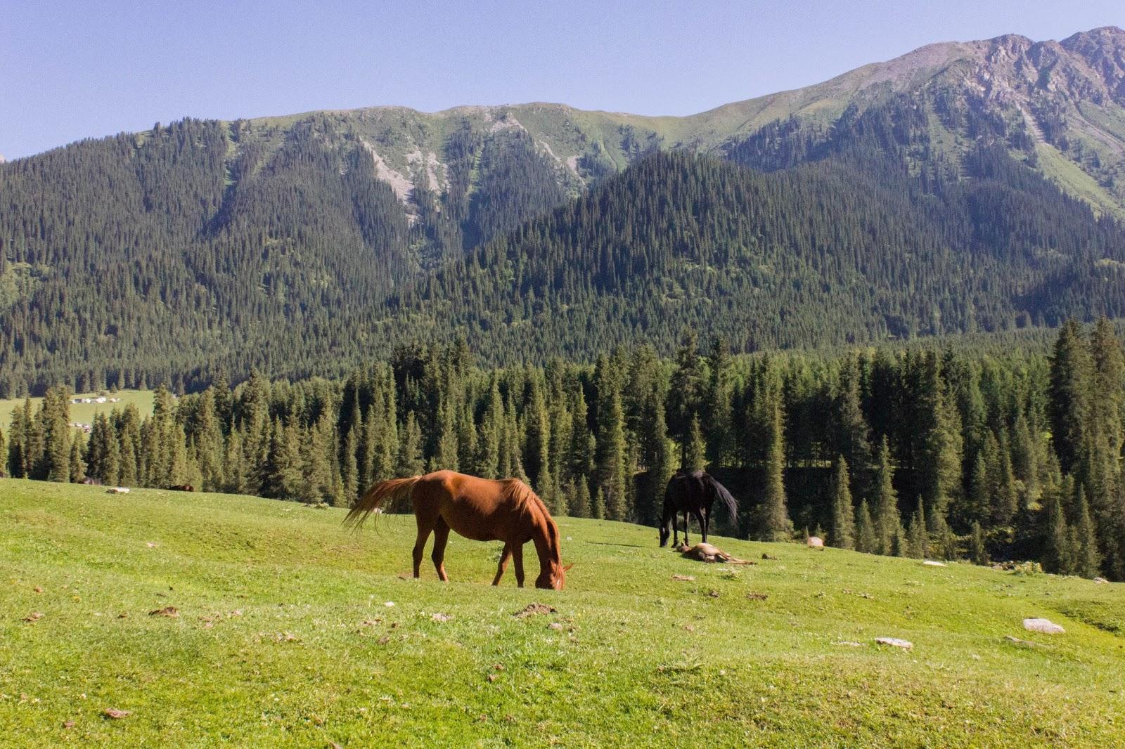 Кыргызстан, Джеты-Огуз, Иссык-Куль, лошади