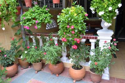 hortikultura - bunga