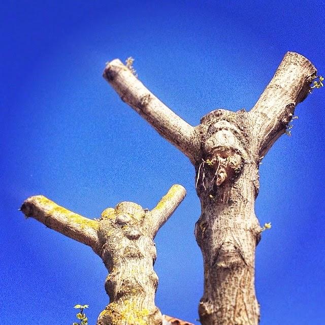 """Árboles crucificados desmochados. Este año a mi pueblo no llegará la Resurrección. Los árboles han sido  cortados y los pájaros no tendrán  ni siquiera donde anidar. Este año  a la naturaleza, como le hicieron  al Cristo, la han """"crucificado"""""""