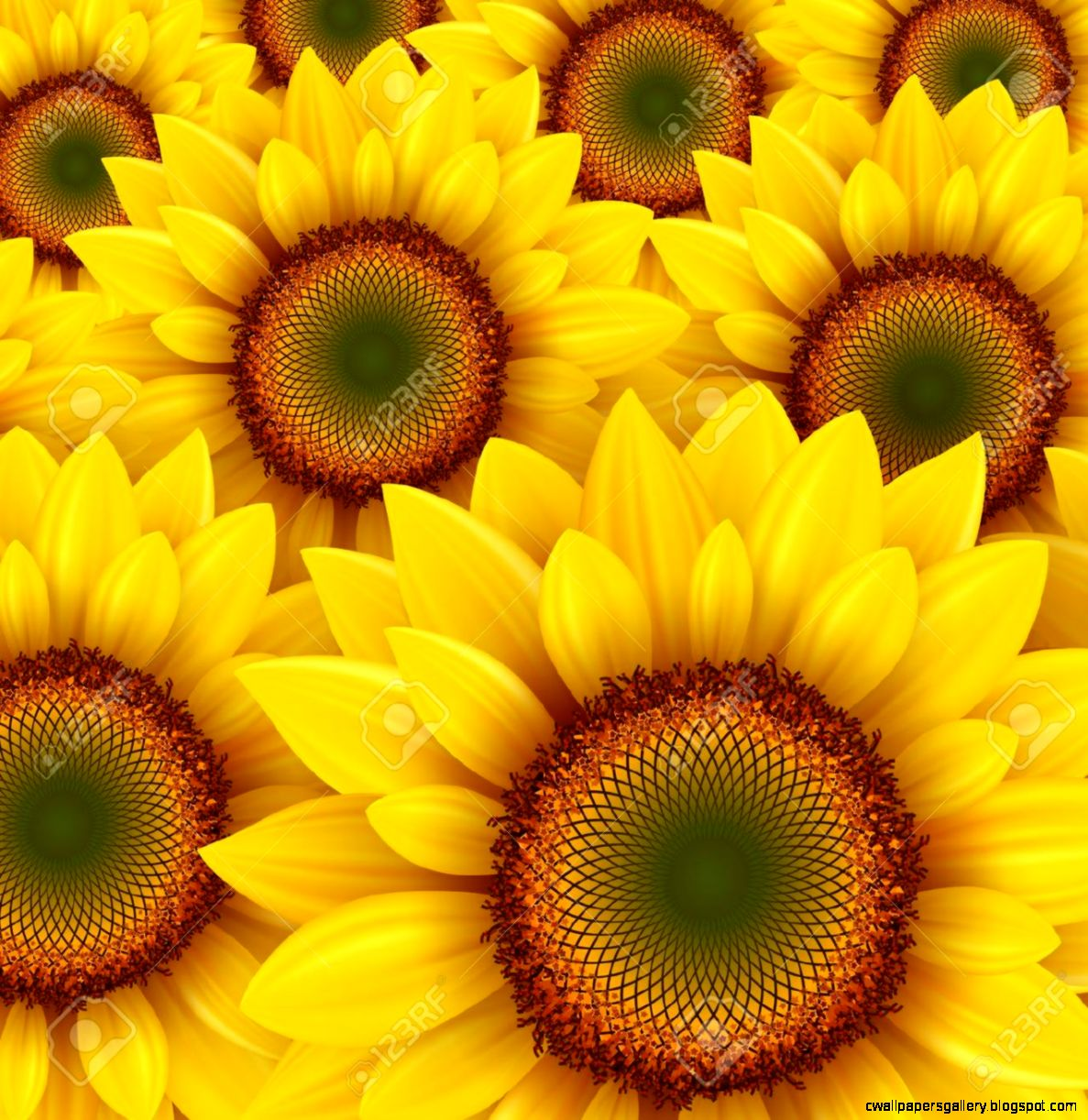 Sunflower Field Stock Illustrations Cliparts And Royalty Free