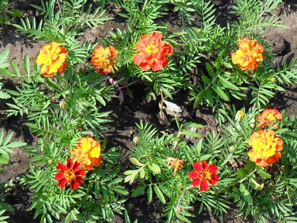 Аленький скромный цветочек