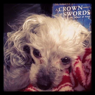 A sleek grey poodle, Murchie, lays so close to the camera that only his face is visible. Behind him is a paperback copy of A Crown of Swords.