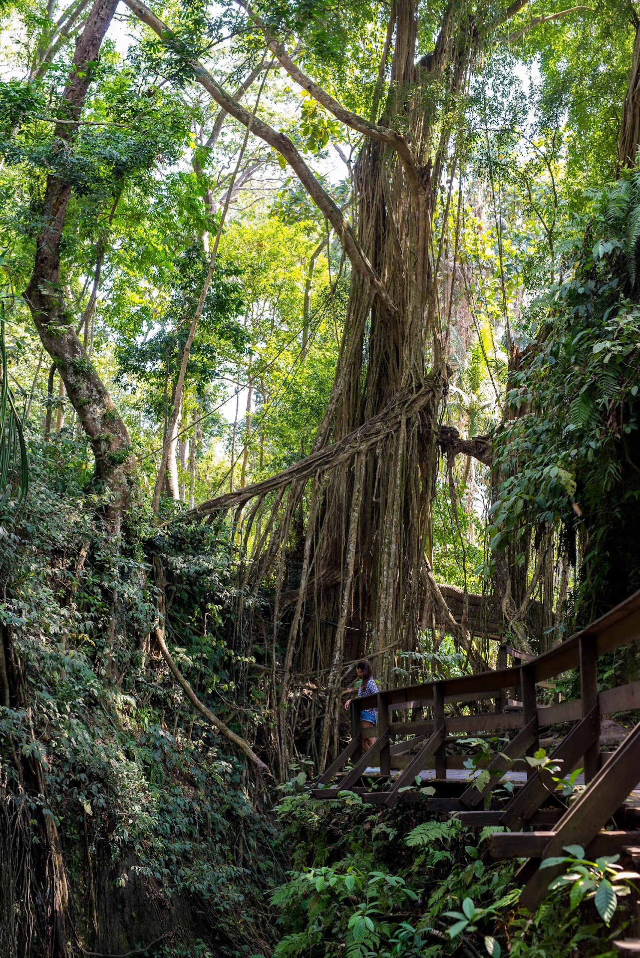 jungle, travel blog, bali ubud, monkey sanctuary, nature landscape photography, photographer california san francisco bay area, travel blogger, southeast asia, couple bloggers, bali attractions, things to do