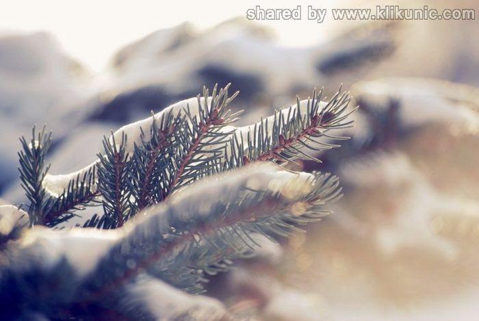 http://3.bp.blogspot.com/-rx2VUJuxG6M/TXLfl5ZLZKI/AAAAAAAAP6c/AUkn5FOWZkY/s1600/winter_07.jpg