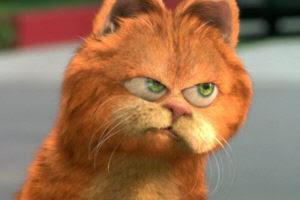 Qual é a raça do Garfield-Onde comprar