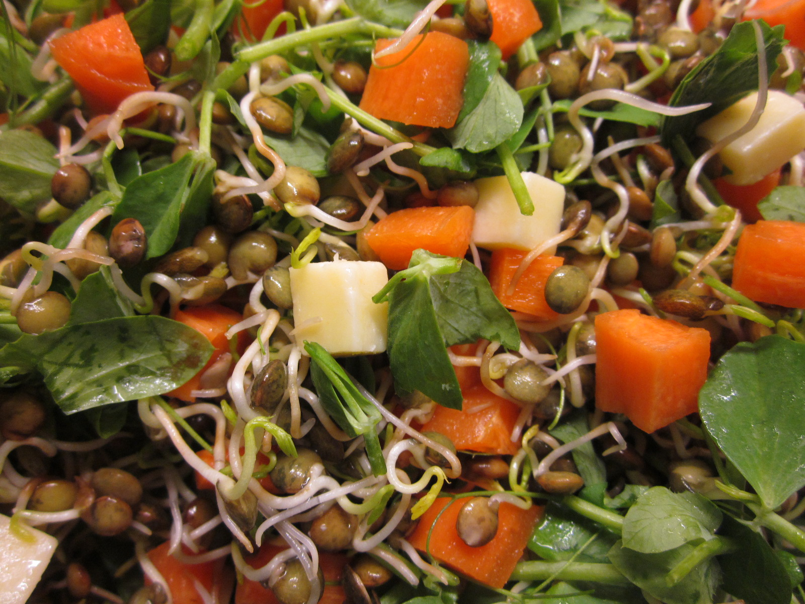 Seasonal Recipe: Sprouted Lentil and Pea Shoot Salad