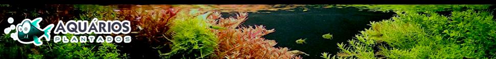 Aquários Plantados - Dicas e Tutoriais de Como Montar