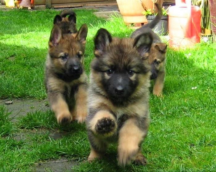 best animals, cute animals, cute dogs, conspiracion perruna, perros, dogs, el mejor amigo del hombre, puppies, cachorros
