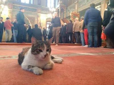 foto kucing di dalam masjid 04