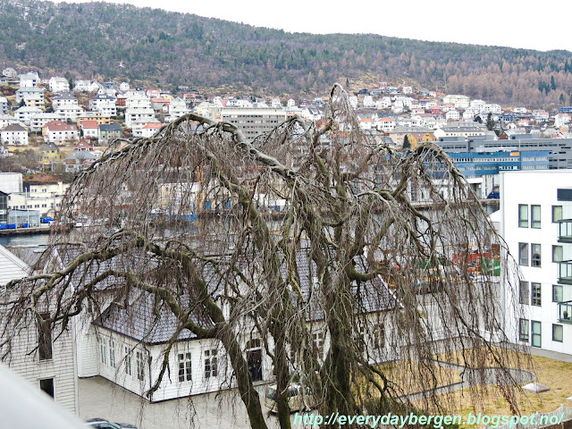 Bergen tree