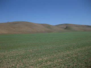 Lone tree on the russet-colored hills along Santa Ana Valley Road.