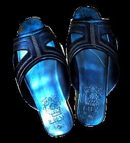 sandal lily